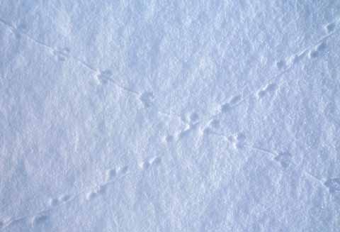 Päästäisen Jäljet Lumessa