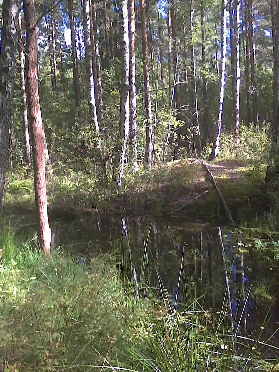 Idyllinen linnavuorilampi... metsän kätköissä.